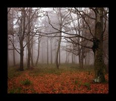 foggy-forest by pauljavor