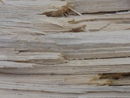 Wood Texture 25 by Ox3ArtStock