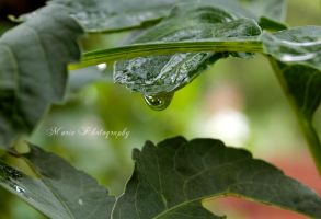 After rain by marialivia16