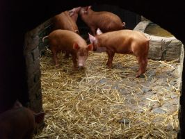 piglets .4. by kittykatty89