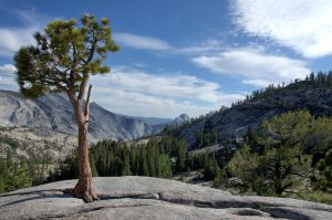 Olmsted Point by amzimme