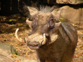 Ed, a quite handsome Warthog by wickedlovelyfaery