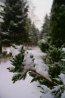 Carrying the first snow by gavron01