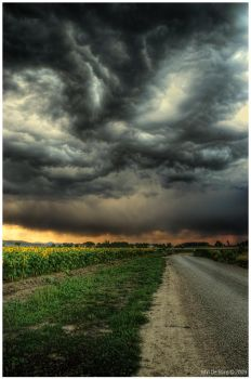 Sunflowers and Thunderstorms by kkart