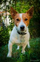 Milo in the garden by ferencjanos