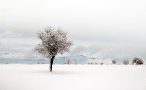 White Winter by Chris-Lamprianidis
