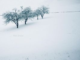 ... first Snow II by love1008
