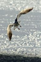 Coming in to land by stevepl