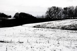 Monochromatic rural experience by mister-softy