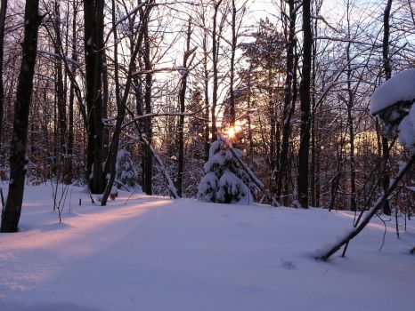 Winter Forest Stock 1 by HOTNStock