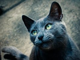 Blue Cat by ExcidiumGT