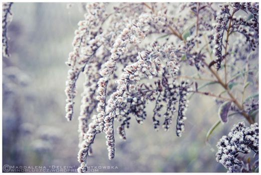 +First Frost+ by Dra-Matha