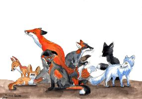 All the foxes by IrinaSaier