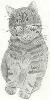 Realistic Kitty by Hickoryfur