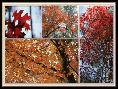 Fall Trees Collage by PegasusHollow