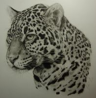 Jaguar by Dhekalia