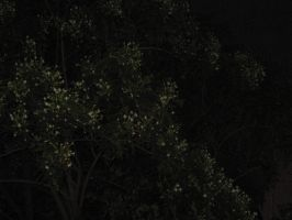 Night Jasmine Tree in Bloom by AbstractWater