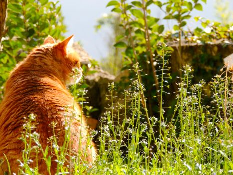 Garden cat III by CloudSymphony