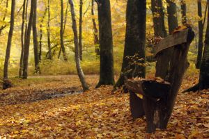 take a seat, Autumn I by Wilithin