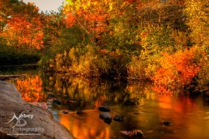 Rev - HDR Autumn River 2 by Nebey