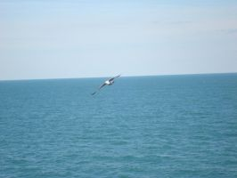 Seagull by SwiftNote