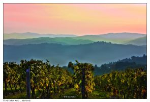 Vineyard and beyond. by Marcello-Paoli