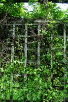 Full plant remains forever fence by AdaSquatters84