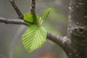 Leaf on Tree Stock by thelovelyones