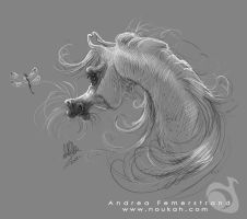 Sketch: Arabian horse by Noukah
