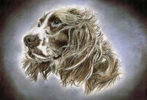 cocker spaniel by ADRIANSportraits