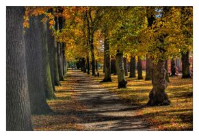 Path in the Kleinstadt HDR by ceasetobeme