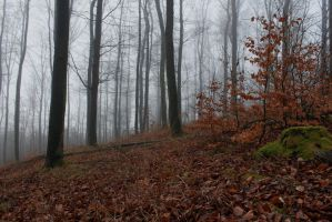 Foggy Forest 18 by sacral-stock