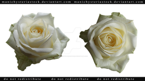 White Rose Cut Out by ManicHysteriaStock