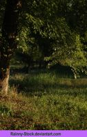 Evening Under the tree -STOCK by Rainny-Stock