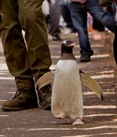 Penguin March by cathy001