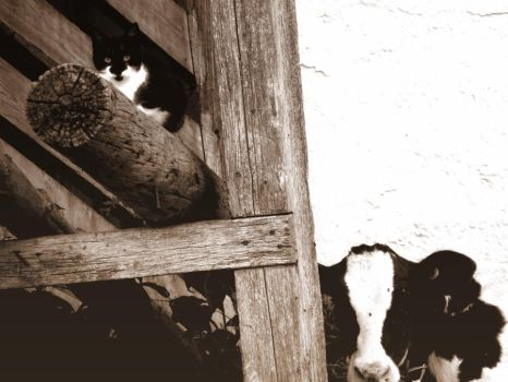 Cat and Cow Friends by xbethyintherainx