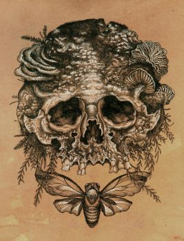 Skull with Cicada. by urielstempest