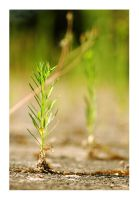 miniature tree by fxcreatography