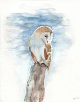 Frosty Barn Owl by Amaranth44