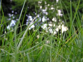 Through the Grass by Jellings