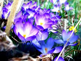 Spring :] by narare