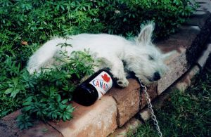 Drunken Dog by iridium