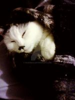 My sleeping cat by nadine20