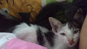 newest member in our cat family, leopard by EvaHuynh