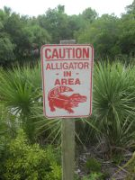 Alligator Warning by r-a-i-n-y