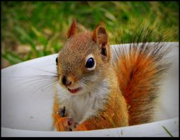 Relaxed Little Squirrel by JocelyneR