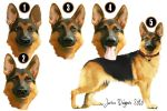 German shepherd - concept... by Daeliel