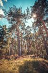 .: Sunny Forest :. by Frank-Beer