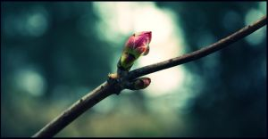 Early Spring by Teadux
