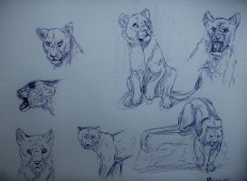 Fursona sketch page 2 by CaledonCat